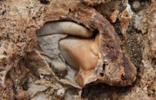 Konya'da bulundu... 98 milyon yıllık