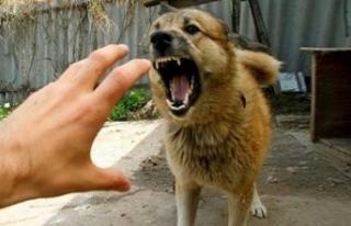Bir kez daha köpek dehşeti! Yemek veren adamı parçaladılar