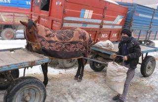 Soğuklar bastırdı… Atlar battaniyeye sarıldı