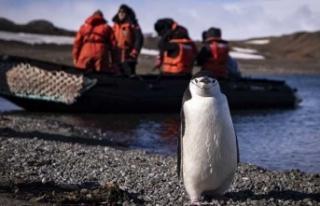 Türk ekibini penguenler karşıladı...