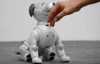 Yalnızlıktan bunalanlara robot kedi ve köpek verildi