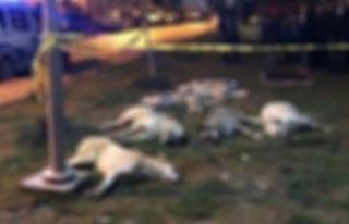 Ankara'daki köpek katliamında sıcak gelişme