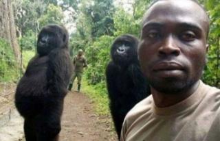 Şaka değil gerçek! Goriller selfie çektirdi