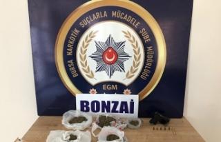 Bursa'da 'Bonzai' operasyonu! Çok sayıda...