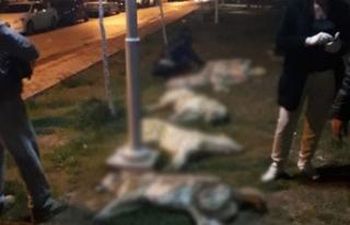 Köpek katliamı davasında yeni gelişme!