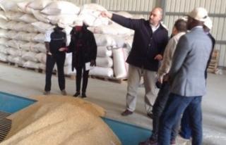 TİKA'dan Gambiyalı ve Senegalli tarım uzmanlarına...