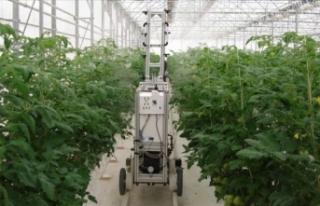 Örtü altı tarımda uzaktan kumandalı ilaçlama...