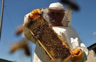 Arıların oğul verme ritüeli ilginç görüntüler...