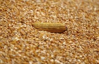 Bakan Pakdemirli mısır alım fiyatını açıkladı