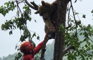 Çıktığı ağaçta mahsur kaldı: İmdadına AKUT...