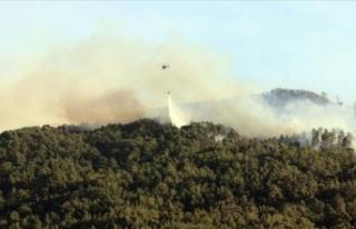 Aydın'da çıkan orman yangını Muğla'daki...