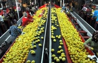 Yaş sebze ve meyve ihracatı yüz güldürdü