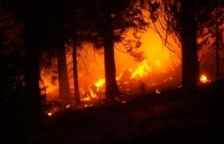 ABD'nin batı yakasındaki orman yangınlarında...