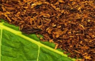 Sözleşme dışı üretilen tütünlerin alım-satım...