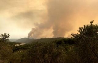 Suriye sınırındaki orman yangını 4 gündür sürüyor!