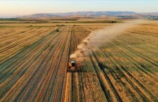 Tarım vasfını kaybetmeye yüz tutmuş araziler...