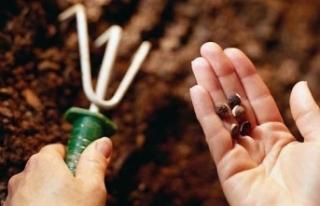 Tohum sanayicilerinden 'sertifikasız tohum'...