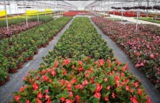 Salgında süs bitkilerinin ihracatı arttı