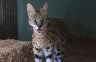 Yaralı yabani ve kaçak hayvanlar yaşama tutunuyor
