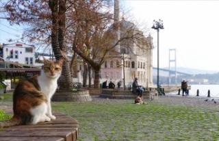 Marmara'da hava sıcaklığı mevsim normallerine...