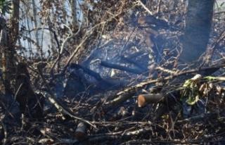 Sakarya'da 4 dönüm alan yandı