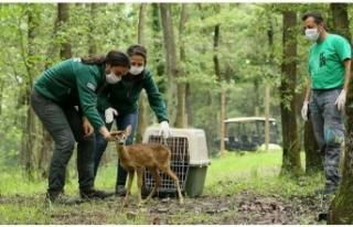 Ormanya'yı geçen yıl 5 milyon kişi ziyaret...