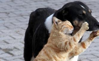 Kedi ve köpeğin dostluğu | VIDEO