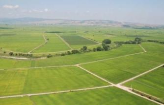Kirası 100 lira olan araziye 23 bin kişi talip
