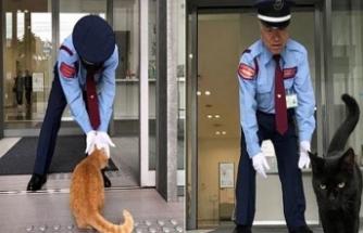 Japonya'da gündem 'fenomen kediler'