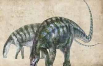 Yeni bir dinozor bulundu, uzmanları şaşırtan ayrıntı