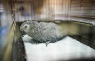 İşkence gören papağanın durumu belli oldu