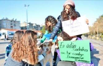 Öğrencilerden sokak hayvanlarına sıcak yuva ve mama
