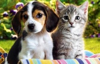 Hayvanseverlere müjde! Araştırma komisyonu kuruluyor