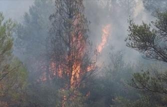 Mardin'de ormanlık alanda yangın!