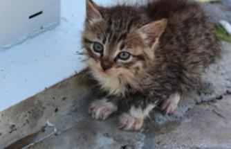 Aracın altındaki kediyi kurtarmak isteyen çocuğa araba çarptı