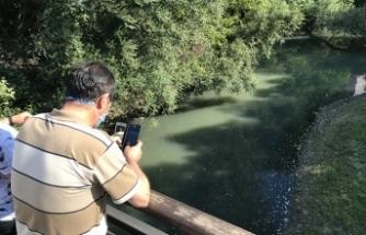 Bartın Irmağı'ndaki şüpheli balık ölümlerine inceleme