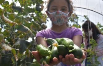 Karslı öğrenciler okul bahçesindeki serada organik sebze ve meyve üretiyor