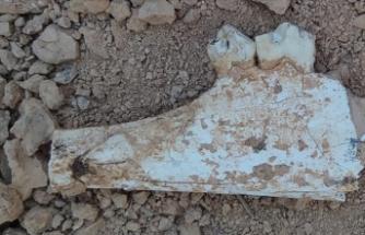 Denizli'de 9 milyon öncesine tarihlenen karıncayiyen ve fil fosilleri bulundu