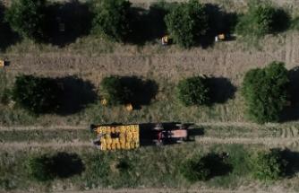 Bu şehir tarımda Türkiye'nin lokomotifi