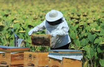 Tarım ve Orman Bakanlığı'ndan üç sektöre destek