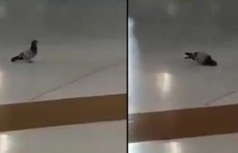 Kabe'de hayrete düşüren görüntü: Subhanallah o güvercin ne yapıyor öyle?