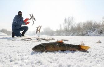 Kazma kürekle balık avlıyorlar