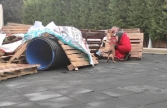 Arama kurtarma köpekleriyle deprem tatbikatı
