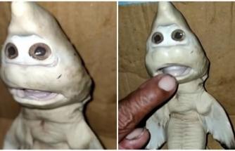 İnsan yüzlü köpek balığı bulundu