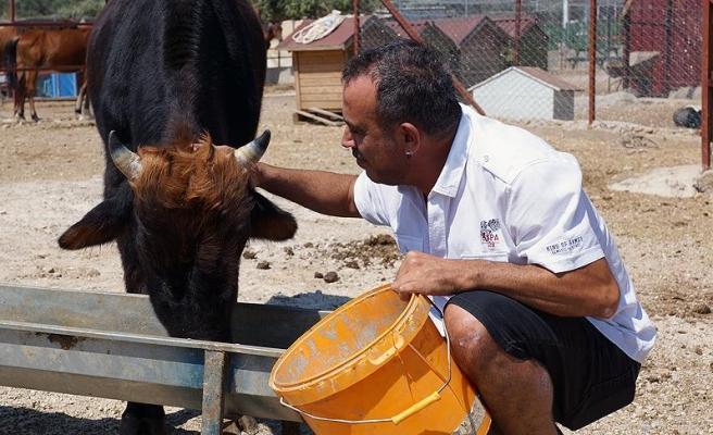 Haluk Levent danası 'Ferdinand'ı ziyaret etti