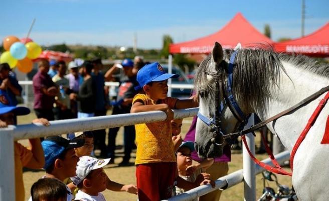 Safkan atlar yarıştı