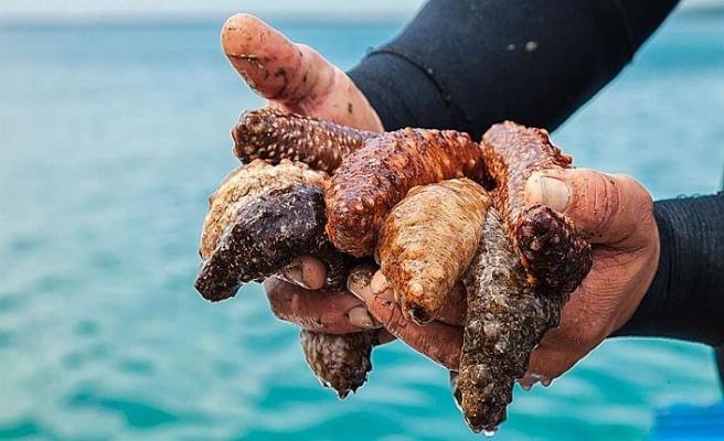 Bir kamyon deniz patlıcanıyla yakalandı
