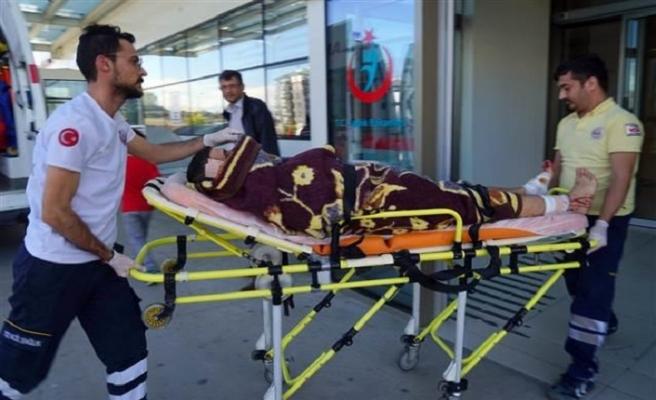 Mantar toplayan vatandaşa ayı saldırdı