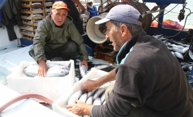 Sabah bereketi: Limana 8 bin palamutla döndü