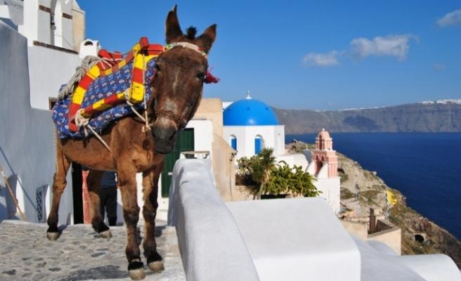 Şişman turistlere eşeğe binme yasağı
